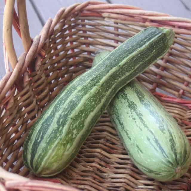 2 fresh zucchini in a basket.