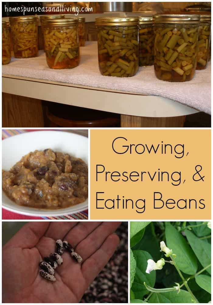 Growing, Preserving, & Eating Beans | Homespun Seasonal Living