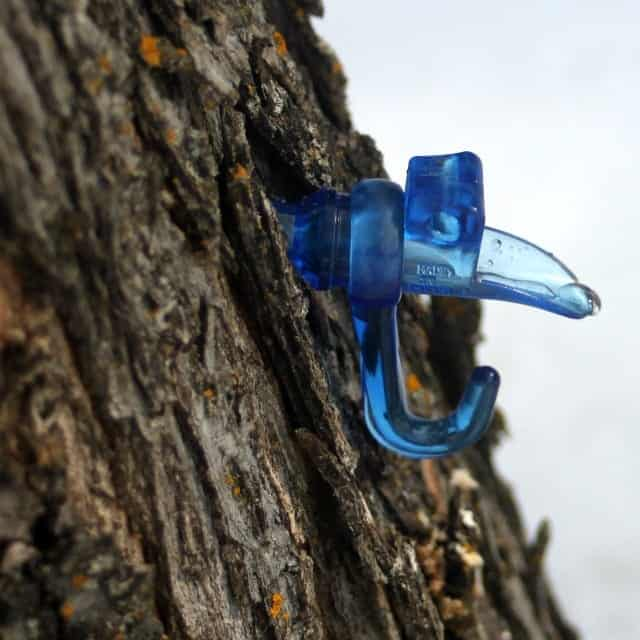 Interested in tapping the trees in your yard? Home Sugaring Preparation should begin now in order to be ready as soon as the temperatures are right.
