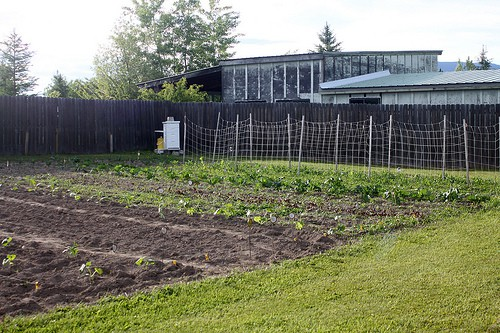 How Much Do I Plant? - Homespun Seasonal Living