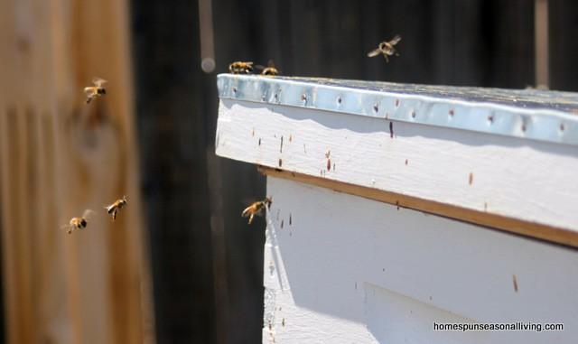 How to Create Native Bee Habitat - Homespun Seasonal Living