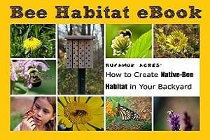 How to Create Native Bee Habitat - Homespun Seasonal Living