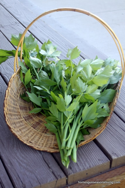 A basket of fresh lovage.