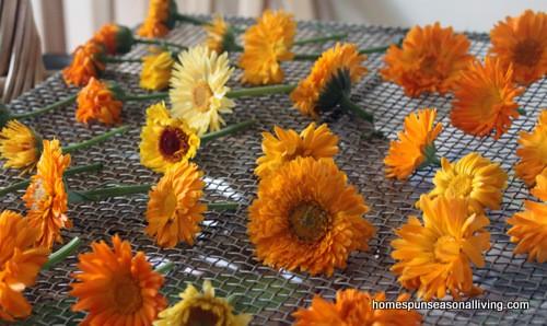 Growing & Using Calendula - Homespun Seasonal Living