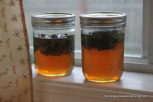 jars of honey infused with lemon balm leaves on a window sill.