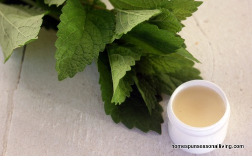 Lemon balm lip balm in a white container sitting next to a stem of fresh lemon balm