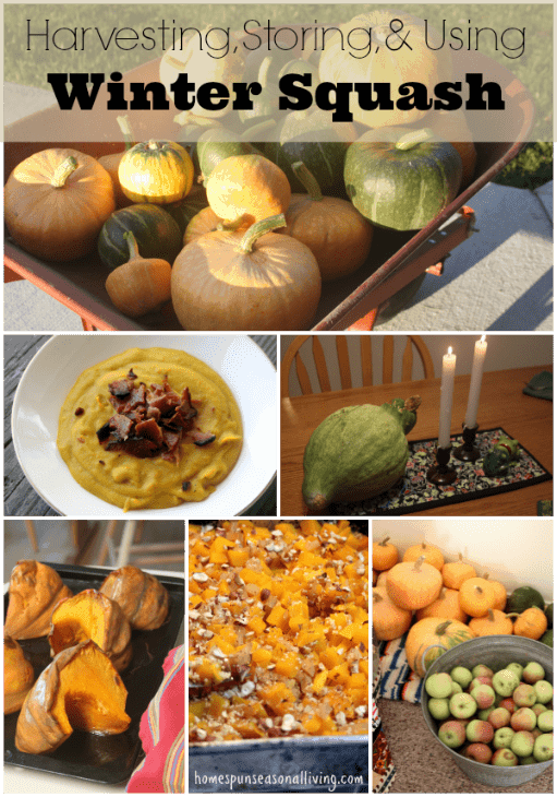 Make the most of winter squash whether homegrown or purchased with these easy tips and recipes.