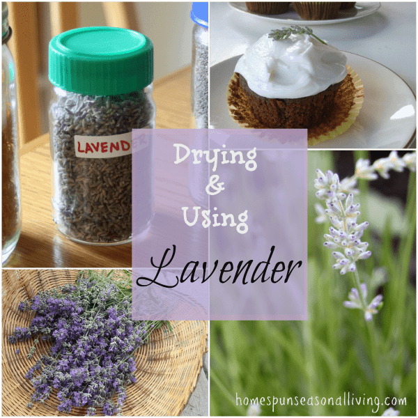 Using & Drying Lavender - Homespun Seasonal Living