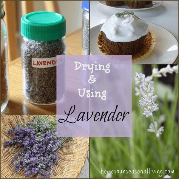 Using & Drying Lavender - Homespun Seasonal Living