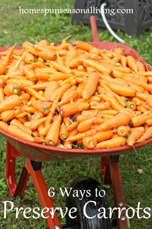Wheelbarrow of carrots.
