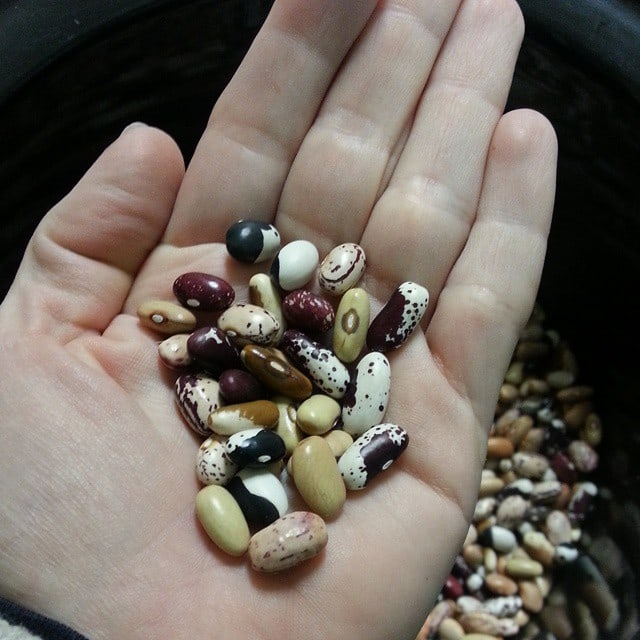 A handful of dried beans.