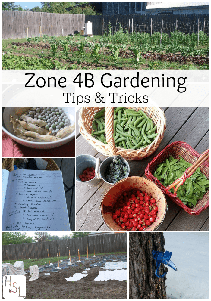 Zone Gardening Part - 39: Some Tips And Tricks From An Experienced Gardener To Get The Most Out Of  Zone 4B