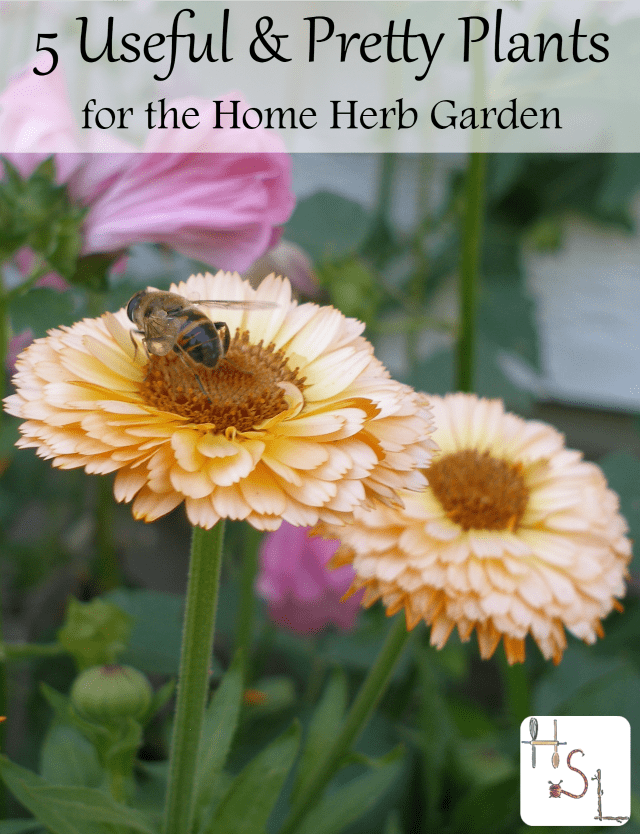 These 5 useful and pretty plants prove that a herb home garden can be a thing of beauty as well as healing function for our homes.