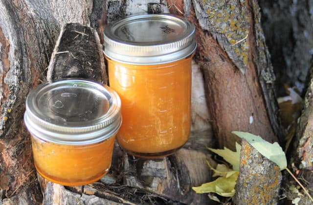 Two jars of dried apricot jam on a tree branch.