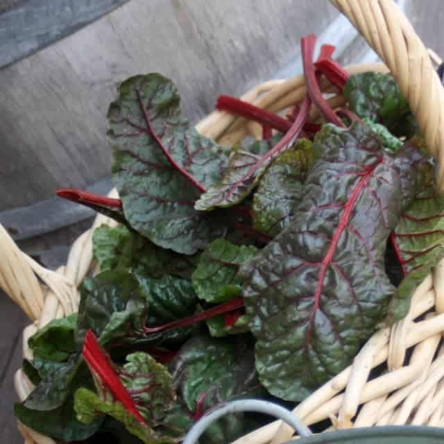 Learn how to preserve leafy greens to eat later when they're not as abundant and productive with these easy and delicious methods.