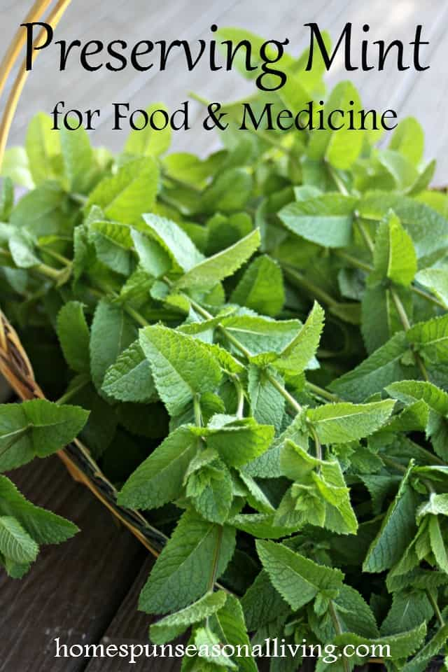 Mint tends to be abundant if not downright invasive thankfully it has a multitude healing and tasty uses. Make the most of it by preserving mint for food and medicine with these easy ideas.