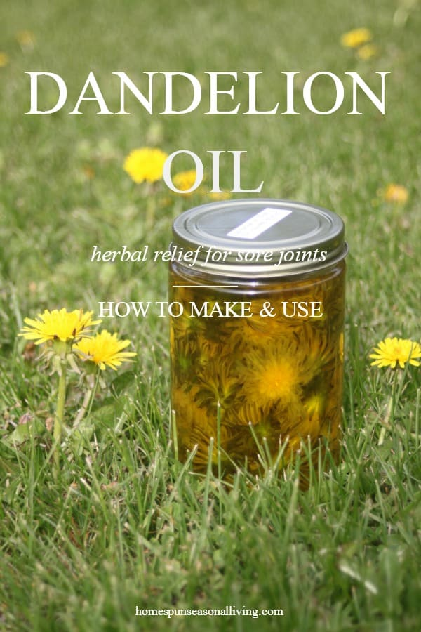 Making And Using Dandelion Oil Homespun Seasonal Living