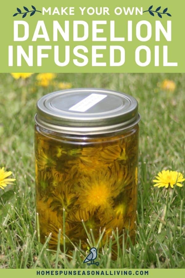 A jar of full of dandelion flowers submerged in olive oil sitting in the grass surrounded by blooming dandelions with text overlay stating: how to make dandelion infused oil.