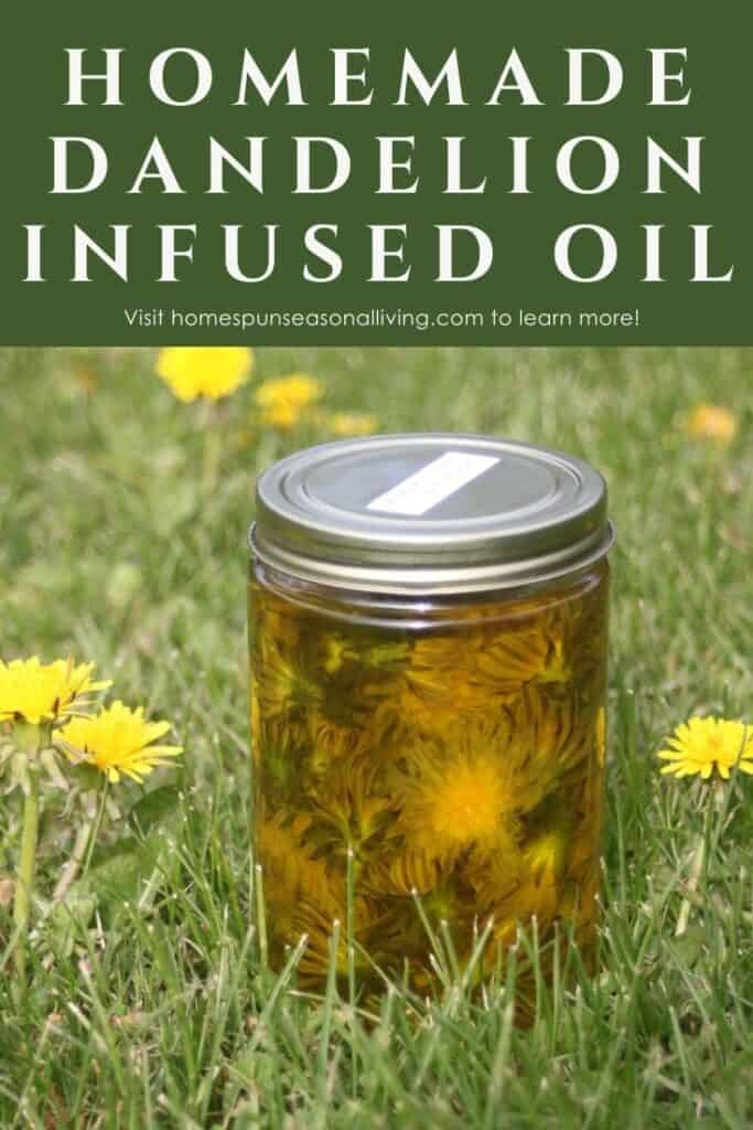 A jar of full of dandelion flowers submerged in olive oil sitting in the grass surrounded by blooming dandelions with text overlay stating: homemade dandelion infused oil.