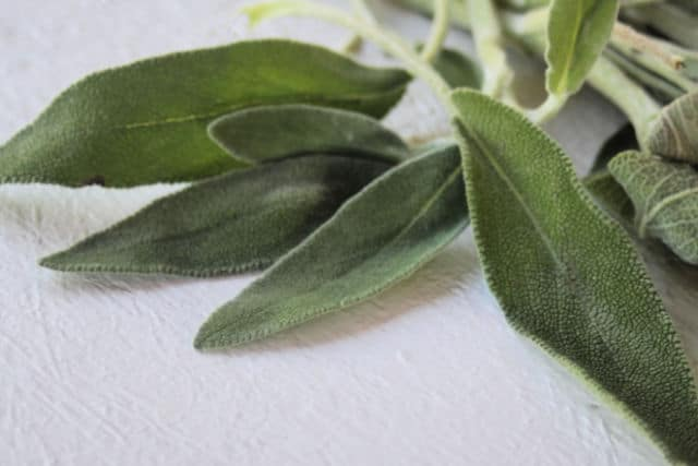 Sage leaves sitting on a white table.