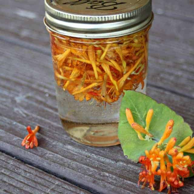 Honeysuckle glycerite infusing in the sun.