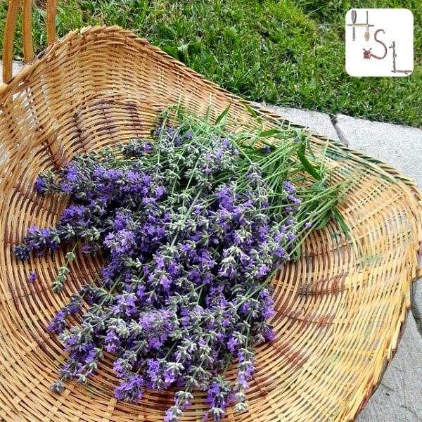 Lavender Home Medicinal Herb Garden2