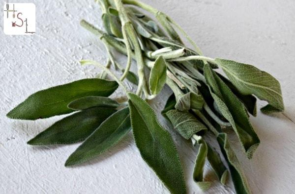 Sage Home Medicinal Herb Gardem