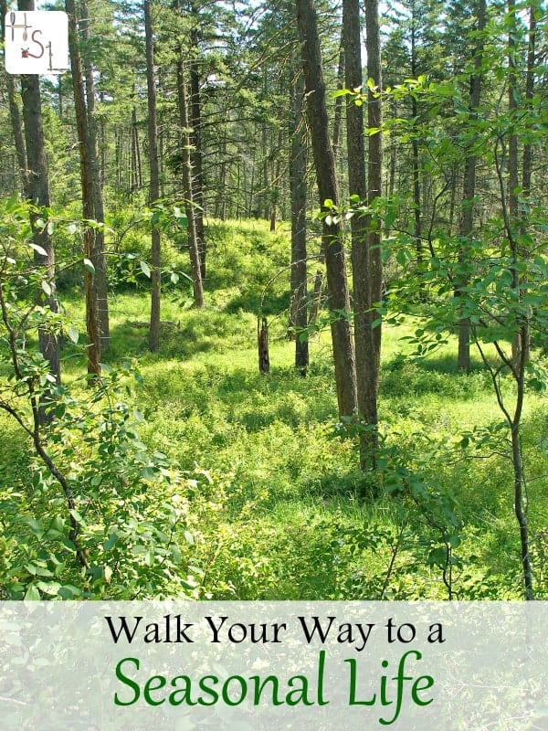 Connect to a seasonal life by using these tips for walking with intention and connection to the natural rhythm of the earth.