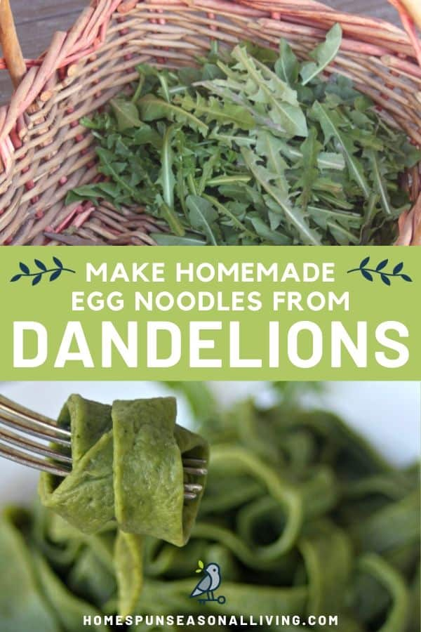 A photo of a basket full of dandelion greens stacked on top of a text overlay stating make homemade egg noodles from dandelions, stacked on top of an image of a green egg noodle wrapped around a fork with a bowl of noodles in the background.