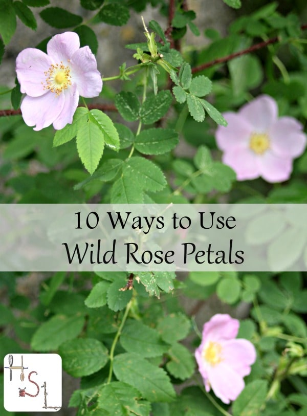 10 Ways to Use Wild Rose Petals