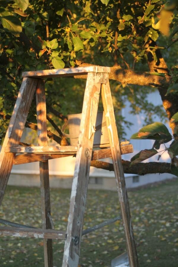 A wooden ladder under an apple tree.
