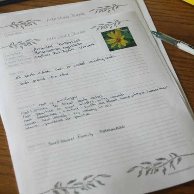 Learn how to study herbs and other plants for medicinal and edible uses with this easy method that includes a journal page printable.