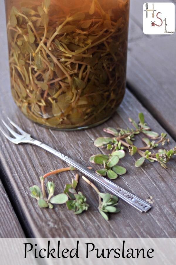 How to Make Pickled Purslane