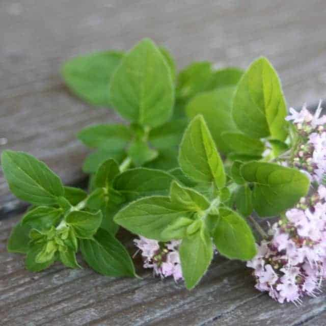 Oregano leaves and blossoms.