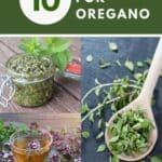 A photo of an open jar of pesto, a cup of herbal tea, anda photo of a wooden spoon full of fresh herb leaves sitting underneath a text block reading 10 uses for oregano.