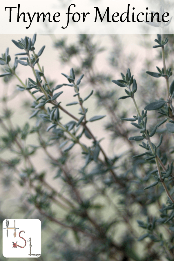 Don't ignore the spice rack when treating common ailments. Learn to use thyme for medicine to remedy digestive issues, colds, and more.