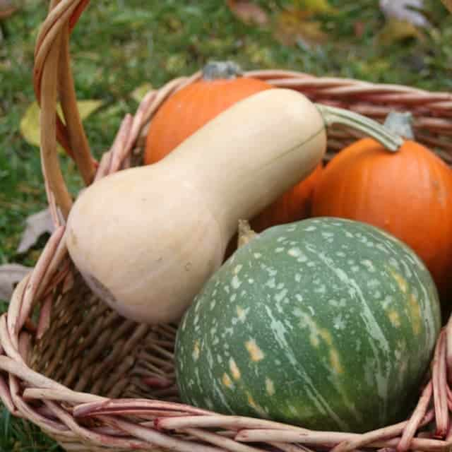A basket of various winter squashes.