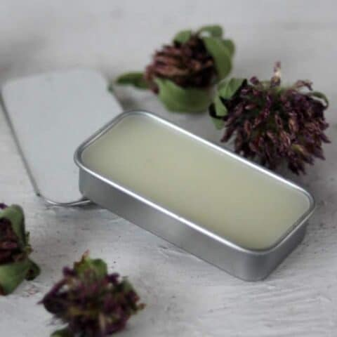 A tin of red clover lip balm surrounded by dried red clover blossoms.