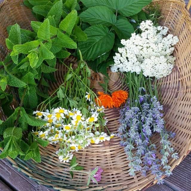 10 Ways to Grow Your Herbalism Skills