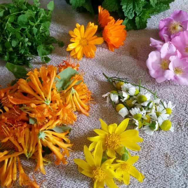 Homegrown Herbal Gifts to Make & Give