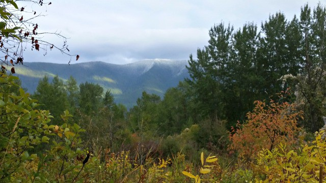 Trees with changing leaf colors and a cloud covered mountain in the background