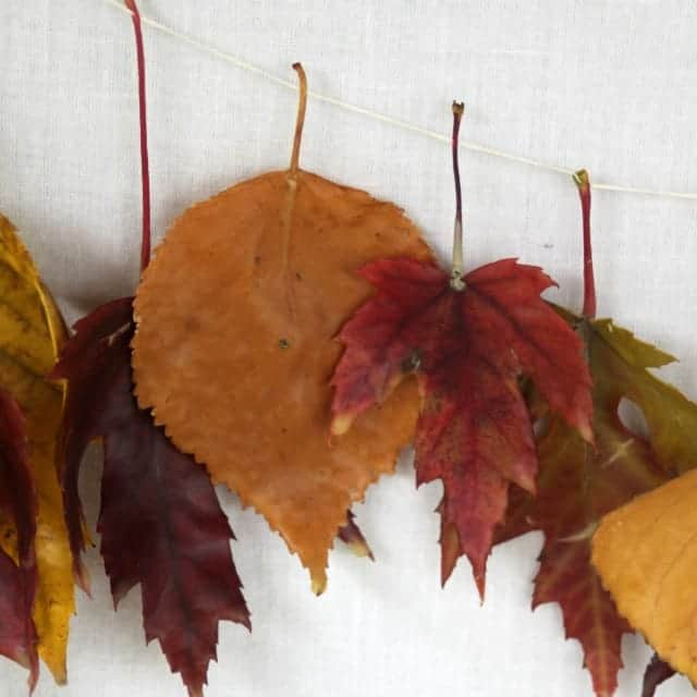 A strand of wax dipped fall leaf garland.