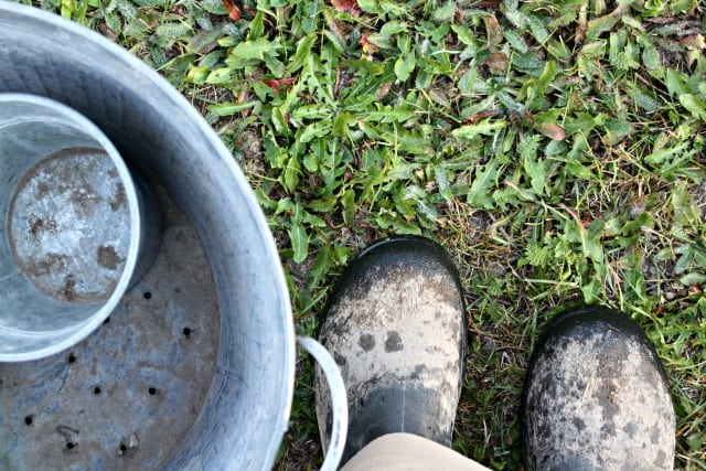 Dirty muck boots get ready for spring.