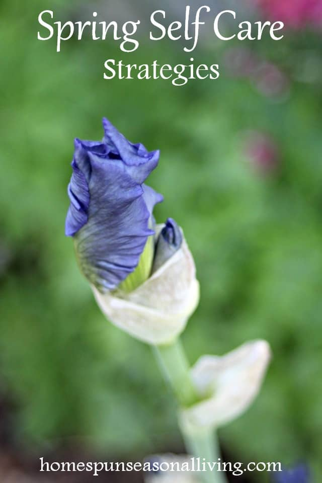 Iris bud.