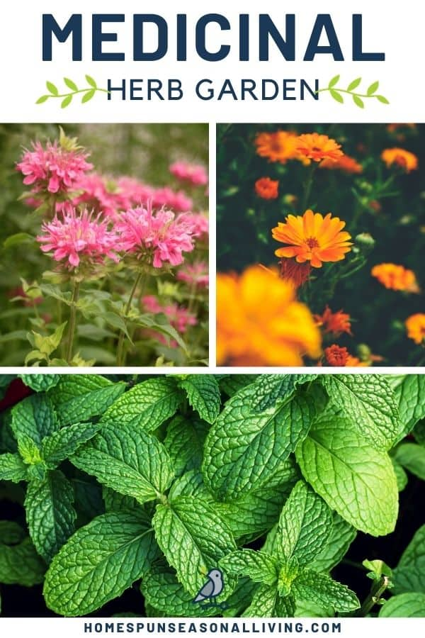 A collection of three images of garden flowers with text overlay stating medicinal herb garden.