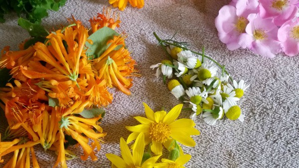 A collection of foraged flowers.
