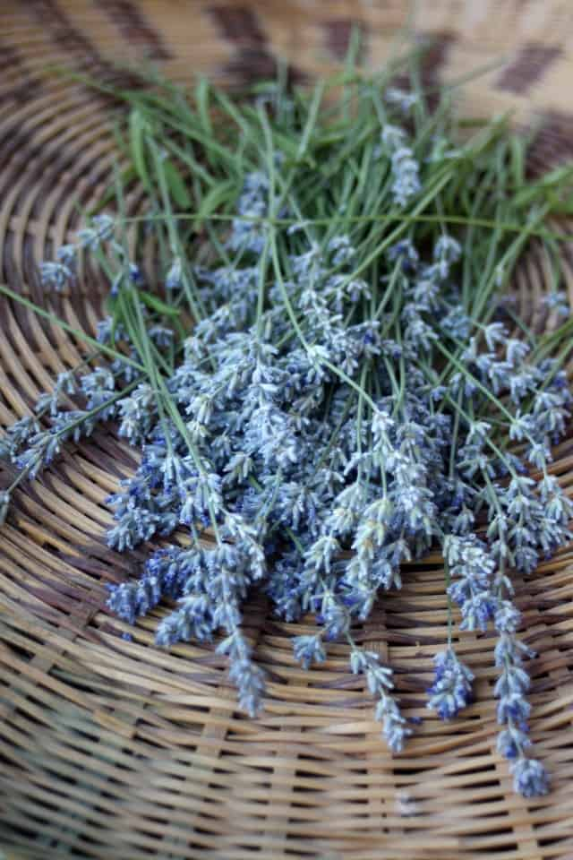 Lavender stems collected in a basket.