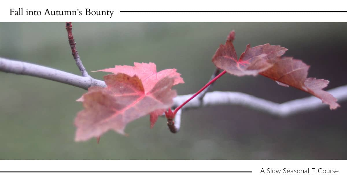 Red leaves on a tree branch with text overlay.
