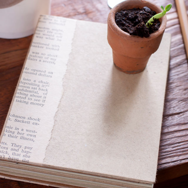 A book on a table with small potted plant sitting on top.
