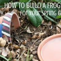 Build a Frog Habitat